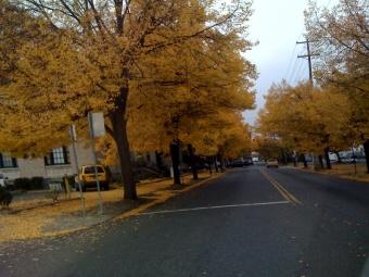 St. Johns Trees